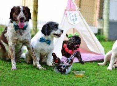 São João: clínica veterinária de Camaçari promove 'arraiá' para animais de estimação