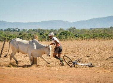 Vaca ataca ciclistas e volta para destruir bicicleta de competidor no Tocantins