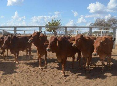 Pesquisa investiga ação de vírus de gado em bebês com microcefalia no Nordeste