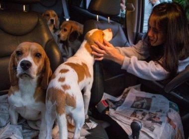 Dois beagles resgatados do Instituto Royal são encontrados abandonados