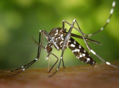Quase 900 cidades podem ter epidemias de dengue, chikungunya e zika