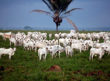 EUA suspendem importações de carne bovina brasileira in natura