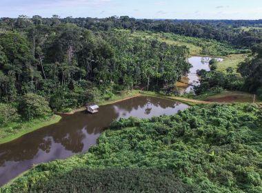 Desmatamento na Amazônia cai 21% em um ano, mas segue em mais de 2,8 km²