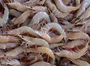 DPU-BA quer que INSS garanta pagamento de seguro a pescadores de camarão