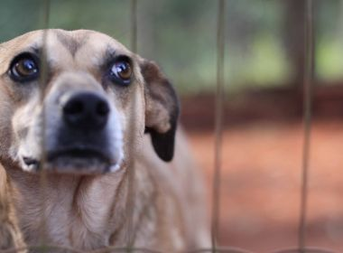 Central: ONG vai acionar homem que confessou ter matado mais de 80 cachorros
