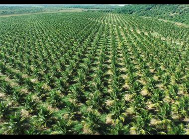 Bahia passa Minas Gerais e fica em 2º lugar em produção de frutas; Baixo Sul é destaque