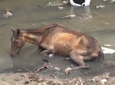 Feira: Cavalo abandonado em área de esgoto revolta moradores