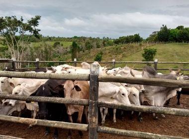 Sul baiano: Polícia prende 7 suspeitos de integrar quadrilha de roubo de gado de raça