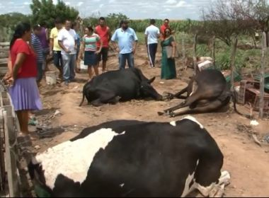 Juazeiro: Laudo aponta 'veneno' em corpos de 9 vacas encontradas mortas em fazenda