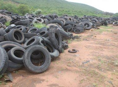 Brumado: Parque com 15 mil pneus vira criadouro do mosquito da dengue