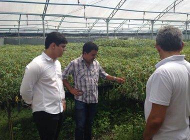 Produção de mudas para combater pragas do cacau não será afetada, diz Seagri