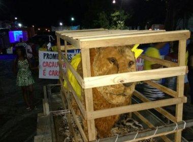 Barra: Após candidato do vice-governador perder a eleição, Leão é colocado em jaula