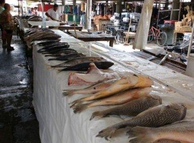 Feira: Moradores diminuem procura por peixes após doença misteriosa