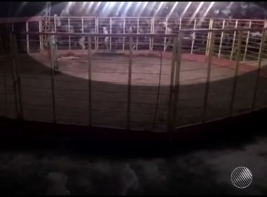 Arquibancada cai durante tourada em Planalto e deixa 54 feridos; veja vídeo
