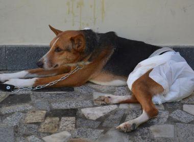Conquista: Cachorro é vítima de estupro e voluntários fazem campanha para tratamento