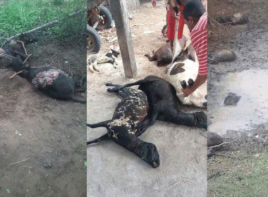 Leão foge de jaula e mata cerca de 30 animais em Serrinha