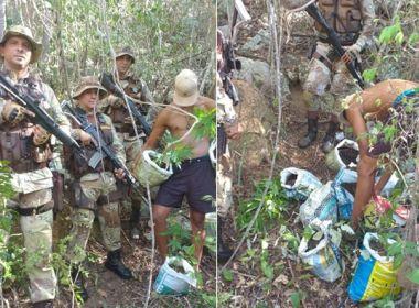 Palmeiras: Polícia apreende cerca de 300 pés de maconha em local de difícil acesso