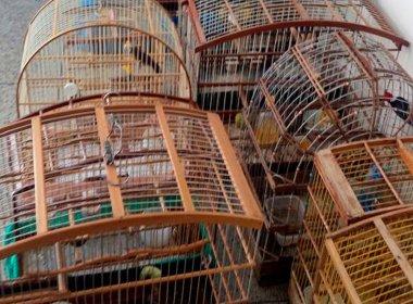 Juazeiro: Ação apreende sabiás e outros pássaros vendidos ilegalmente