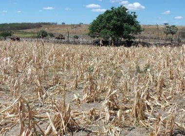 Seguro de perda de colheita é liberado para agricultores de Serra Preta e mais 2 cidades