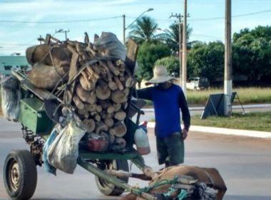 LEM: Dono de carroça é preso após animal desfalecer por não suportar carga