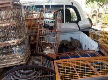 Jeremoabo: Em operação, 65 pássaros selvagens são resgatados pela PRF-BA