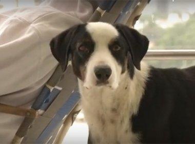Cão vive há três meses em hospital em que o dono morreu