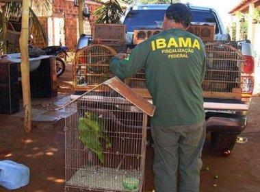 Operação resgata quase 900 animais silvestres no norte da Bahia