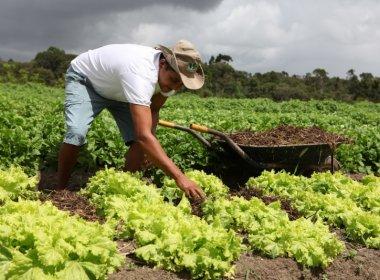 Senado aprova medida que permite renegociação de dívidas de produtores rurais