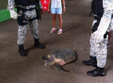 Guarda Municipal resgata tartaruga, tamanduá e uma coruja