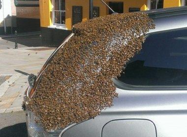 Carro é 'atacado' por 20 mil abelhas por conta de rainha presa no porta-malas