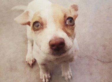 PM encontra cão viciado em heroína, metanfetamina e nicotina