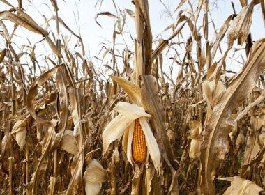 Plenário pode votar MP que libera verba para agricultores atingidos pela seca