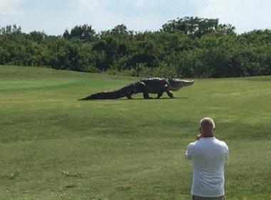 Jacaré gigante assusta golfistas na Florida; assista