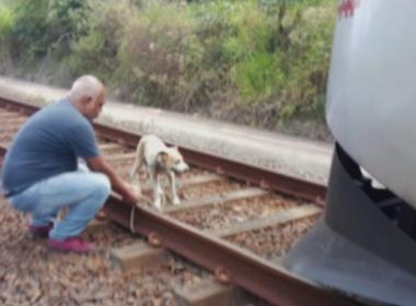 Cadela é presa aos trilhos de metrô e tem vida salva por maquinista