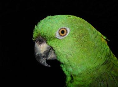 'Dedo-duro': Papagaio denuncia traição e provoca fim de casamento