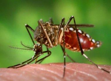 Bahia tem 165 municípios com risco de surto de dengue, chikungunya e zika