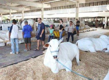Rui Costa inaugura novo tatersal de leilões do Parque de Exposições neste domingo