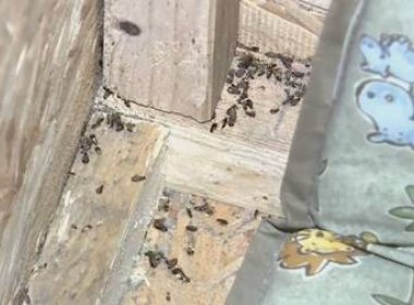 Polícia resgata menina de três anos que era mantida em caixa com insetos na casa do pai