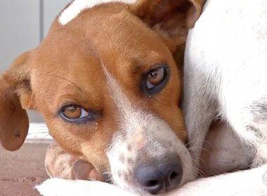 Cadela espera há um mês em frente a hospital em que dono morreu no Mato Grosso