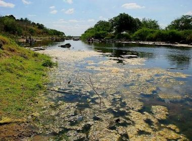 Nascentes das bacias Subaé, Paraguaçu e Pojuca receberão R$ 2,83 milhões
