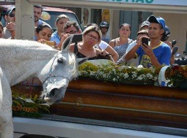 Cavalo é levado a enterro do dono e deita a cabeça sobre caixão