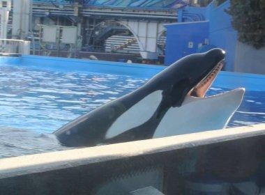 Morre orca que matou treinadora durante apresentação no parque SeaWorld em 2010