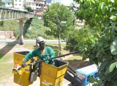 Prefeitura quer podar 5 mil árvores em Salvador até o Carnaval