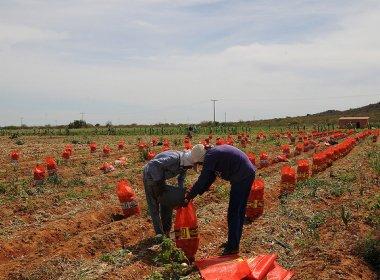 Codevasf assina contrato de R$ 3,6 mi para estrutura de irrigação do Pedra Branca