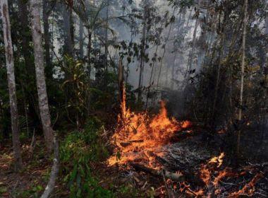 MP-BA abre inquéritos para apurar incêndios em Praia do Forte