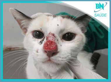 Doença fatal de gatos que pode atingir humanos é destaque na coluna Saúde