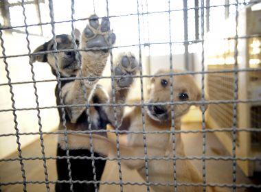 Lei nacional cria programa de castração de cães e gatos