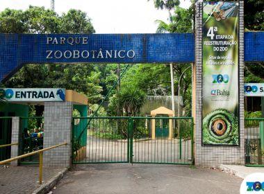 Jaulas de macacos no Jardim Zoológico são protegidas contra Aedes aegypti