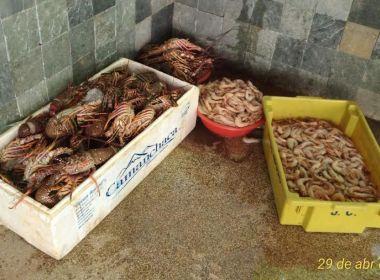 Coppa apreende 130 kg de lagosta pescados ilegalmente; camarão rosa foi confiscado