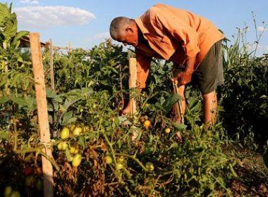 Proposta de lei trabalhista na zona rural permite pagamento com moradia e alimentação